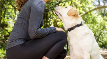6 of the Best Smart Pet Collar Upgrades and Wearables
