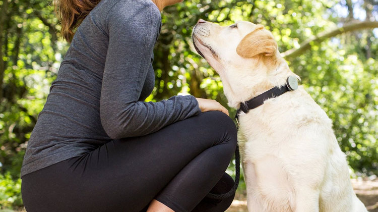 Best Smart Pet Collar Upgrades and Wearables