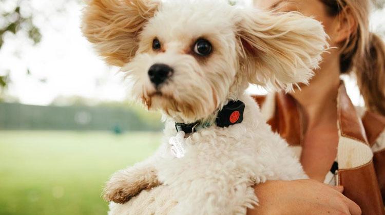Best Smart Pet Trackers PitPat