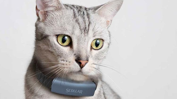 Best Smart Pet Trackers Scollar