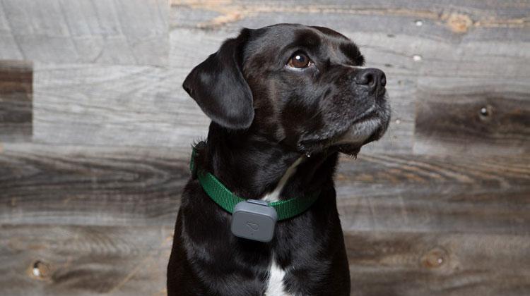 Best Dog Radio Collar Trackers