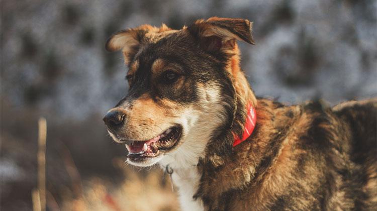 Best Smart Pet Trackers Wuf