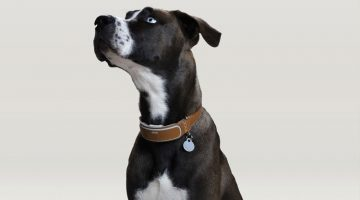 Link AKC Smart Collar Pet Wearable